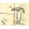 Gomba anatómia 2.