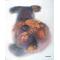 Czudi plüss (2014 olaj, vászon 20×30)